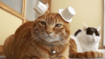 The remedy to TOUGH days- yes cat gifs!