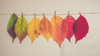 Chilled Autumn Tunes